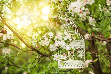 cage à oiseau déco