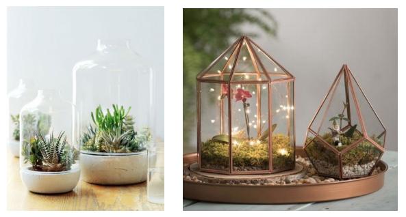plantes terrarium