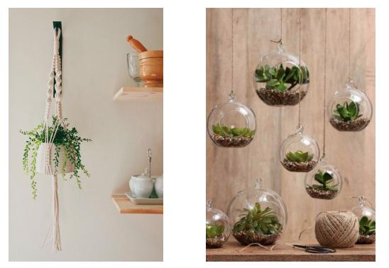 plantes suspendues décoration