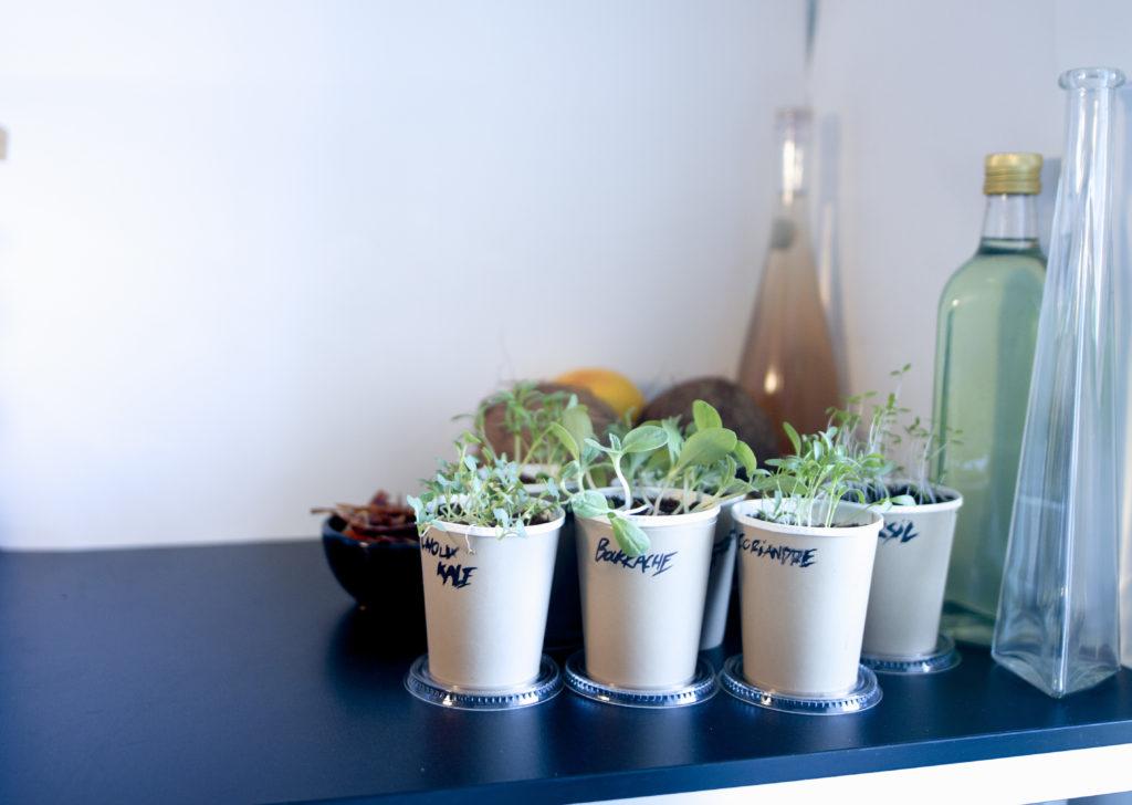 CupPlante jardinage