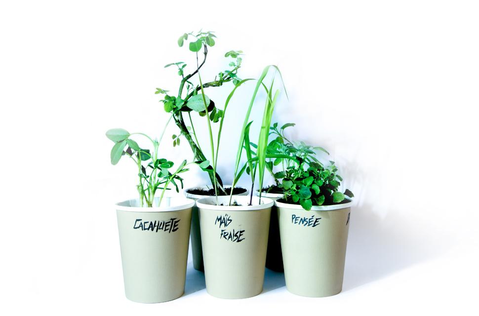 Cupplante, le jardinage autrement et simplement…